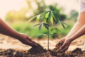 Niños plantado un árbol